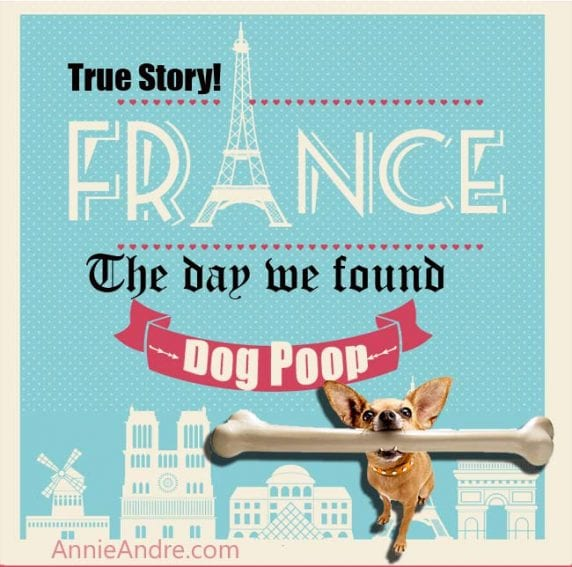 dog poom france infographic
