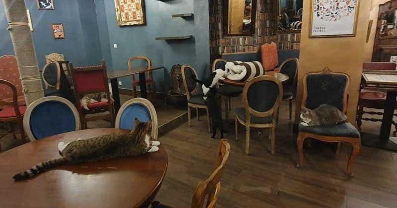 Le café des chat in Paris