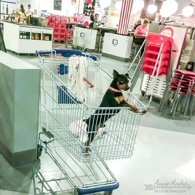 a dog at Ikea in France: It's ok to bring small dogs in public places including the food store