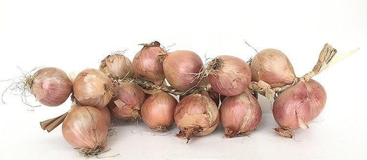 French stereotype and cliches:: Roscoff onions and the onion Johnny