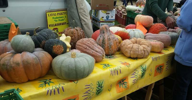 fall festival squash