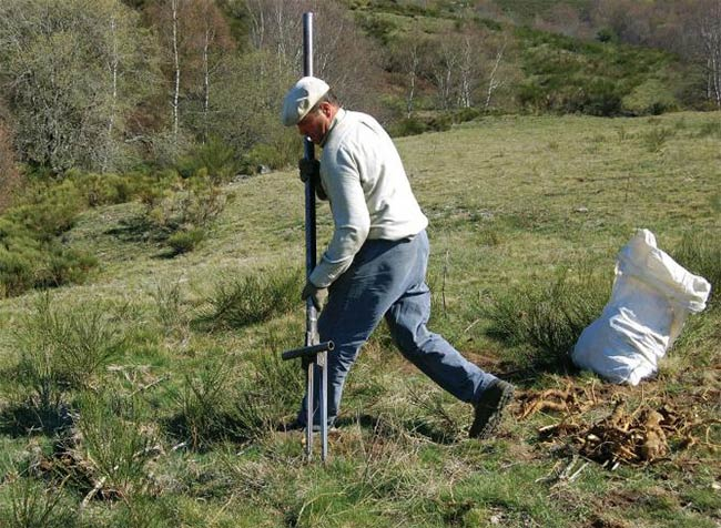 """digging up Gentian roots with """"a devils fork"""" (fourche du diable) on mount Lozère © Odile Rival"""