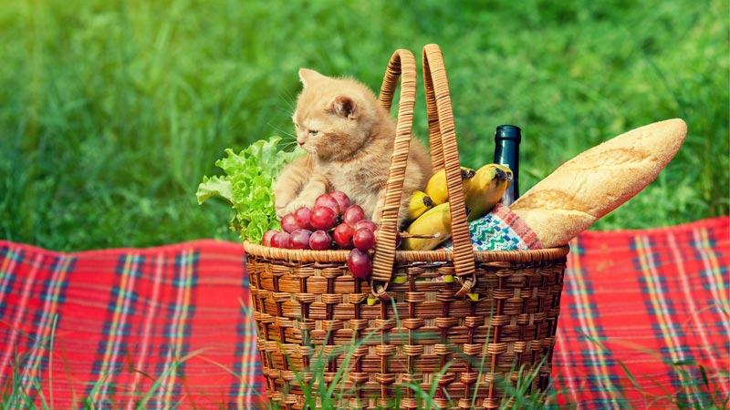 French food French names for cats