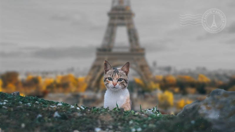 French city names for cat names