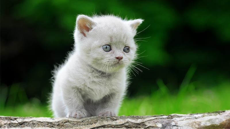 Cute French names for cats