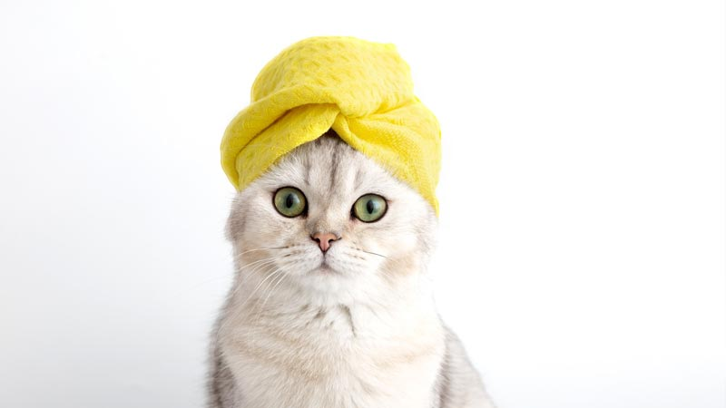 French cat names for pretty cats